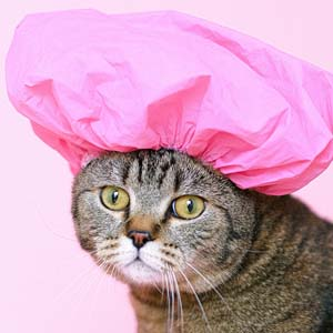 Cat With Pink Hat